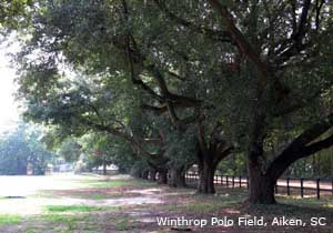 Winthrop Field Trees